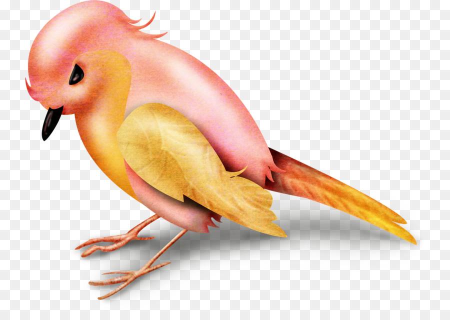 Descarga gratuita de Aves, Naranja, Paseriformes Imágen de Png