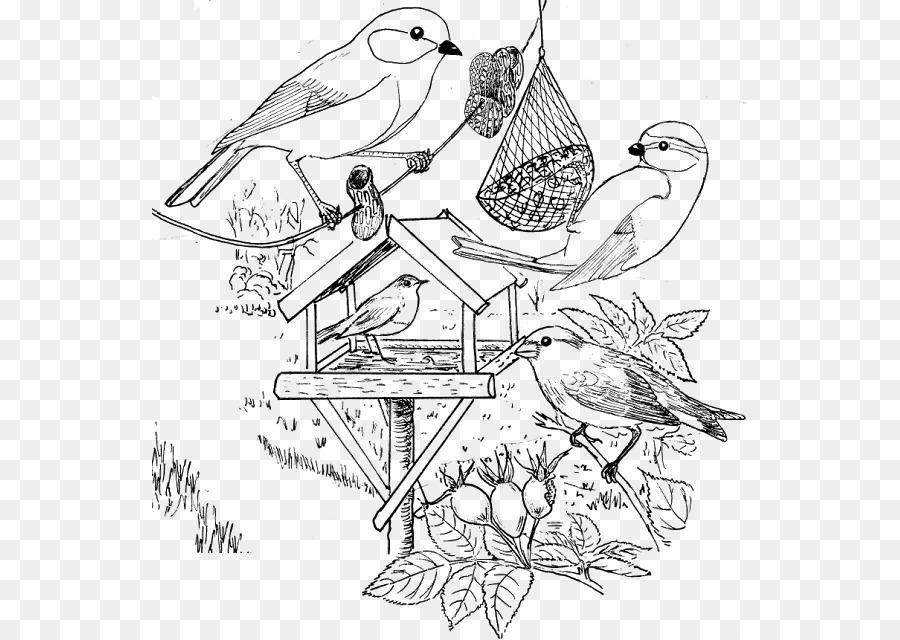 Descarga gratuita de Aves, Página Para Colorear, Invierno imágenes PNG
