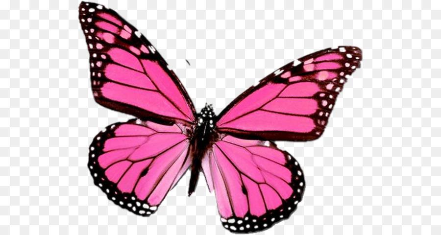 Descarga gratuita de Mariposa, La Mariposa Monarca, Mariposa De Swallowtail Imágen de Png