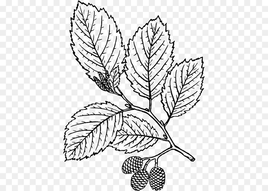árbol Hoja Libro Para Colorear Imagen Png Imagen