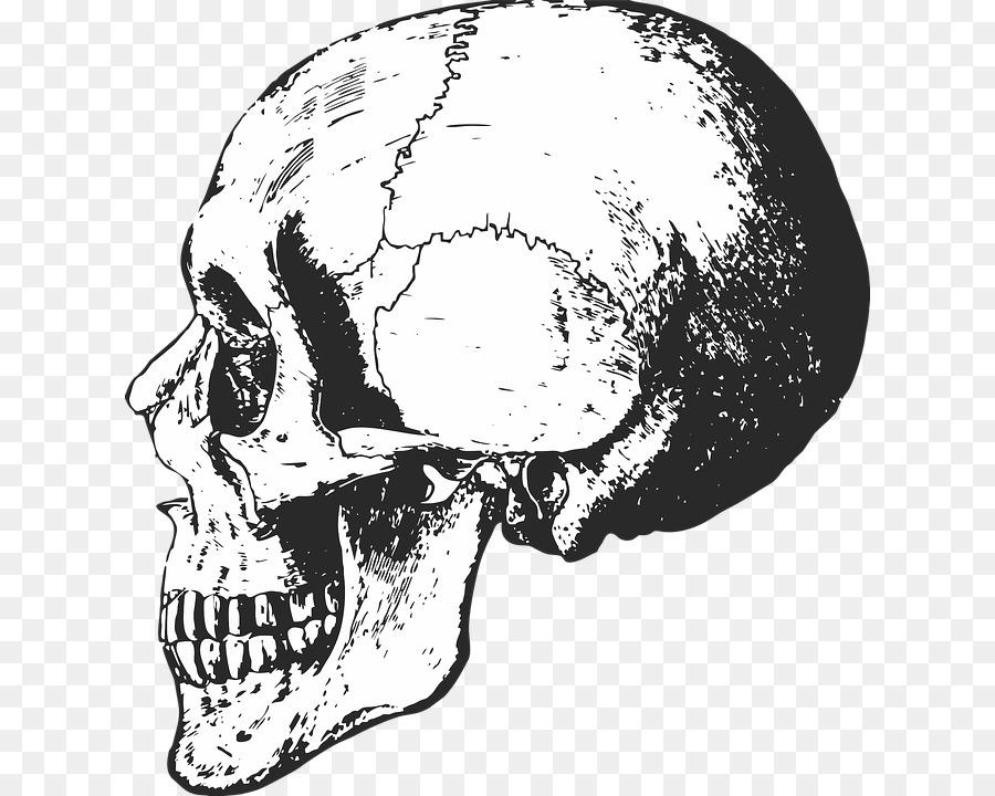 Descarga gratuita de Esqueleto, Esqueleto Humano, Anatomía Imágen de Png