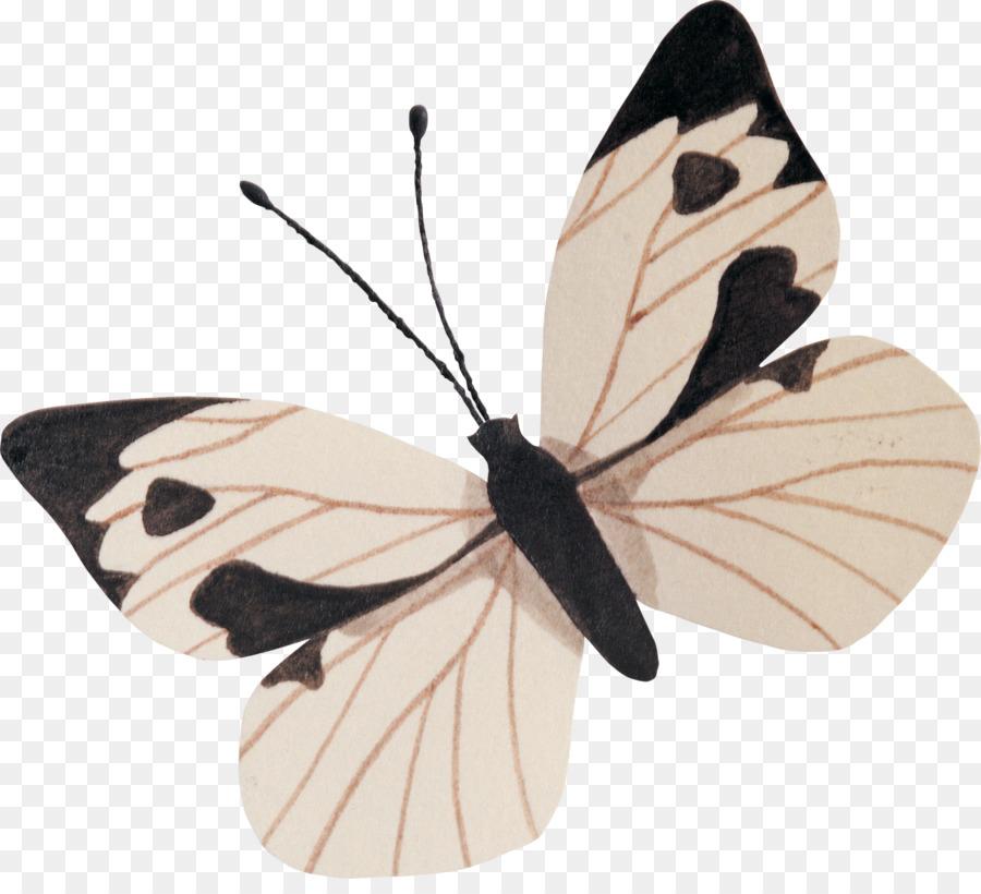 Descarga gratuita de La Mariposa Monarca, Libro, La Nueva Tierra imágenes PNG