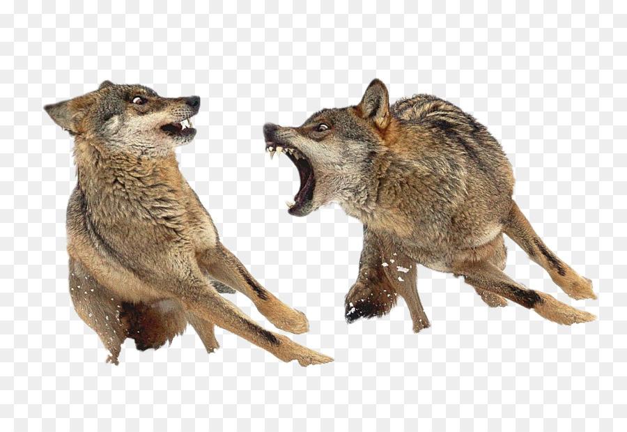 Descarga gratuita de Península Ibérica, Eurasia Lobo, Español Lobo Imágen de Png