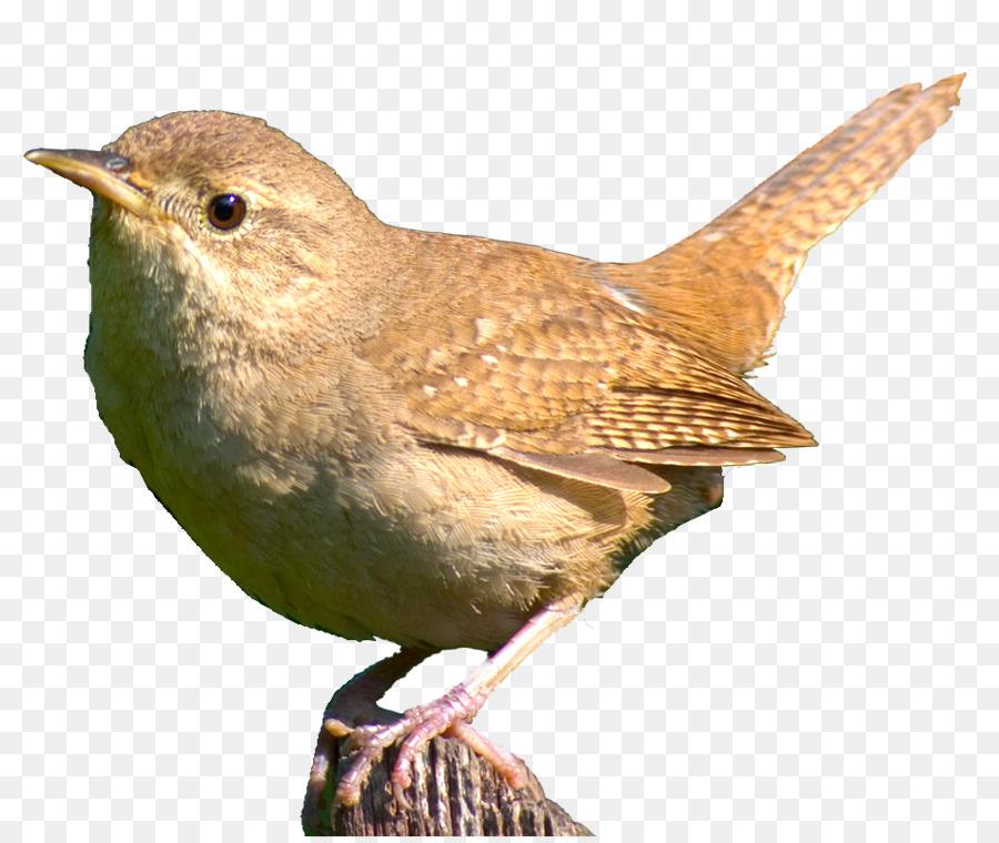 Descarga gratuita de Aves, Aviario, Pico Imágen de Png