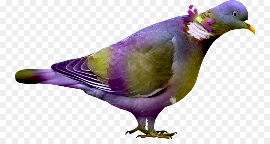 Descarga gratuita de Aves, Color, Modelo De Color Rgb Imágen de Png