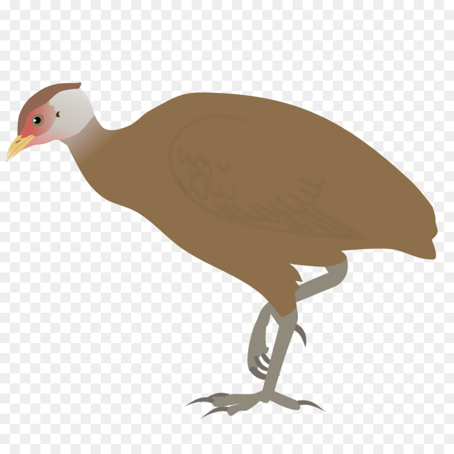 Descarga gratuita de Gran Nicobar Isla, Aves, Gran Nicobar Reserva De La Biosfera Imágen de Png