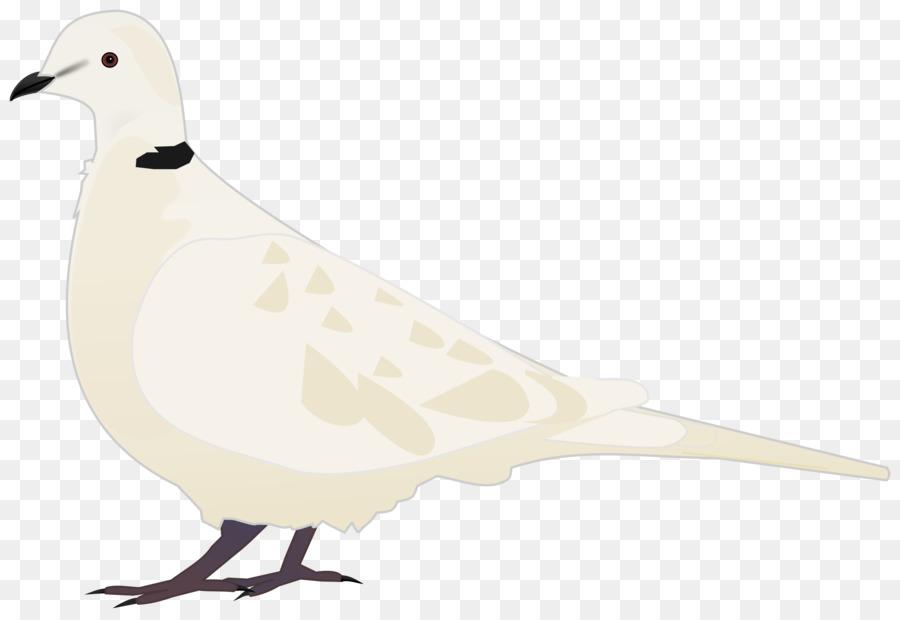 Descarga gratuita de Pico, Las Palomas Y Las Palomas, Aves Imágen de Png