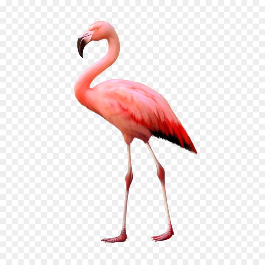 Descarga gratuita de Una Fotografía De Stock, Flamingo, Royaltyfree Imágen de Png