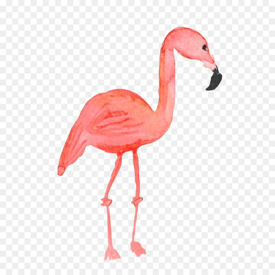 Descarga gratuita de Royaltyfree, Flamingo, Común De Avestruz Imágen de Png