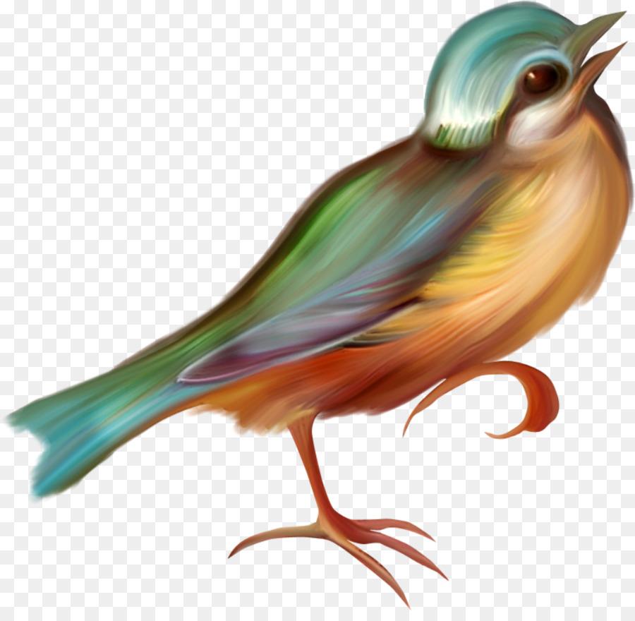 Descarga gratuita de Aves, Dibujo, Gato Imágen de Png