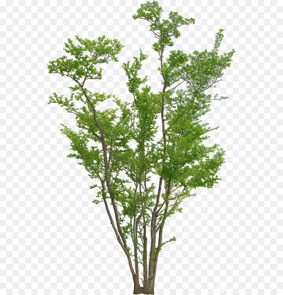 Plantar árboles Y Arbustos De Gráficos De Red Portátiles Imagen árbol