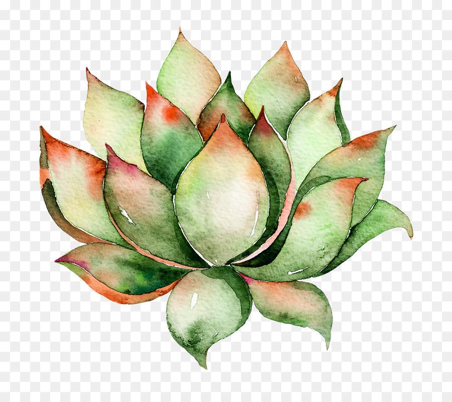 Descarga gratuita de Cactus Y Suculentas, Pintura A La Acuarela, Planta Suculenta imágenes PNG