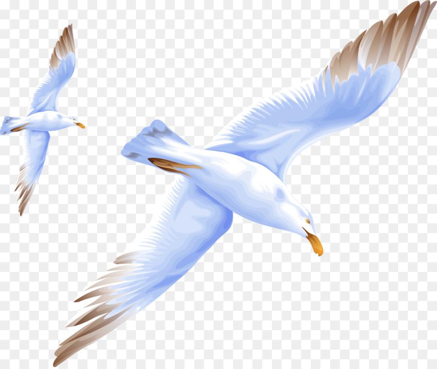 Descarga gratuita de Aves, Miaodao Archipiélago, Las Gaviotas Imágen de Png