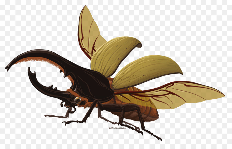Descarga gratuita de Mariposa, El Escarabajo Hércules, Barbara Wittmann imágenes PNG