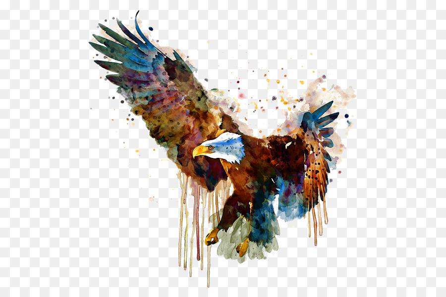 Descarga gratuita de águila Calva, águila, Pintura A La Acuarela Imágen de Png