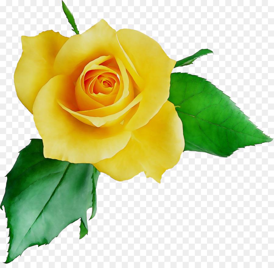 Descarga gratuita de China Rose, Las Rosas De Jardín, Gato Imágen de Png