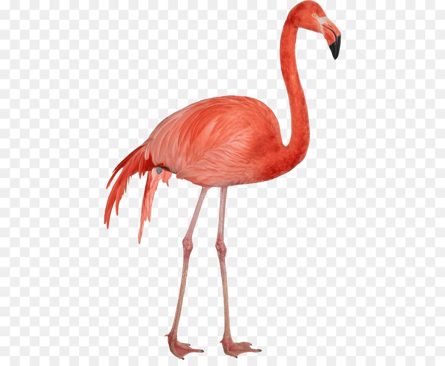 Descarga gratuita de Flamingo, Iconos De Equipo, Descargar Imágen de Png