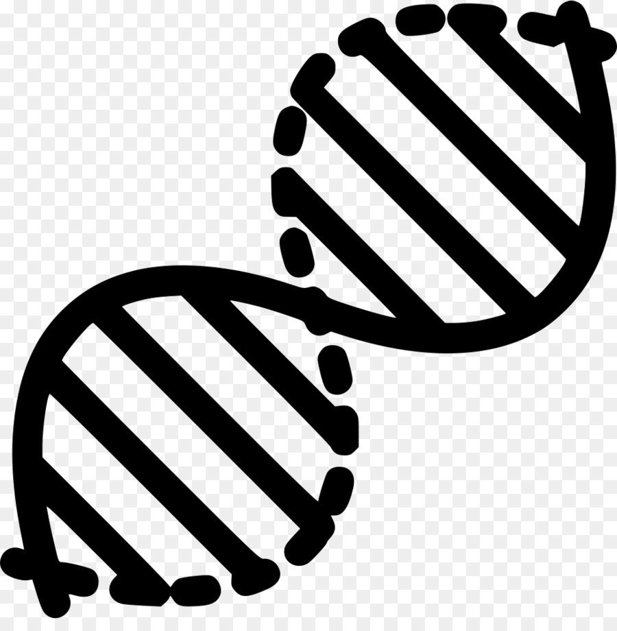 Adn La Genética La Estructura De Los ácidos Nucleicos