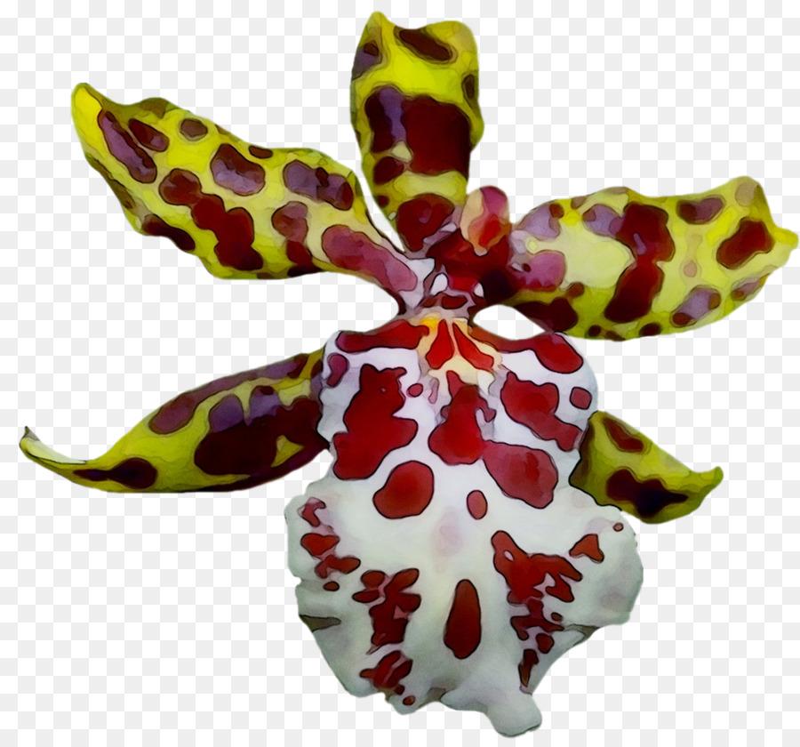 Descarga gratuita de La Polilla De Las Orquídeas, Magenta, Las Orquídeas imágenes PNG