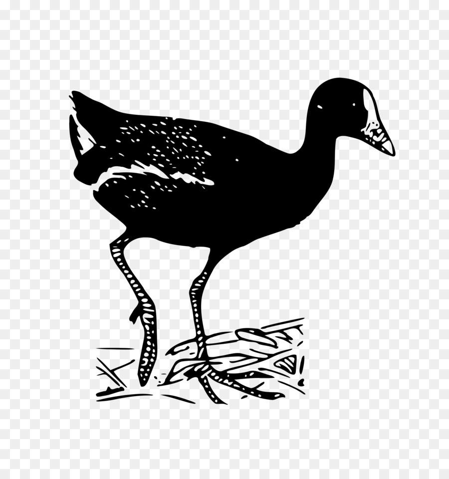 Descarga gratuita de Pato, Ganso, Las Aves Imágen de Png
