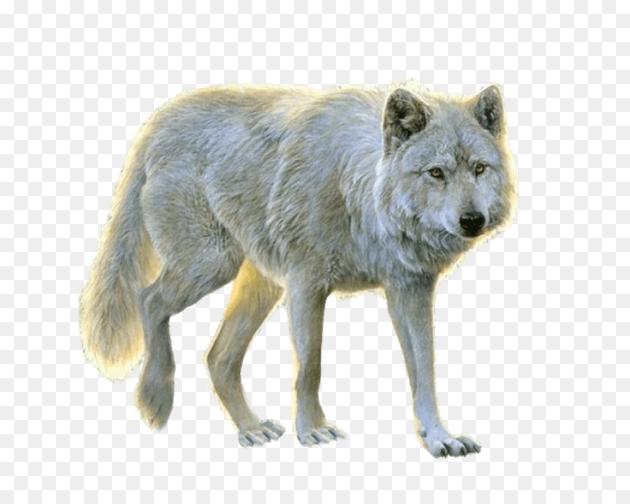 Descarga gratuita de Perro, El Lobo ártico, Canidae imágenes PNG