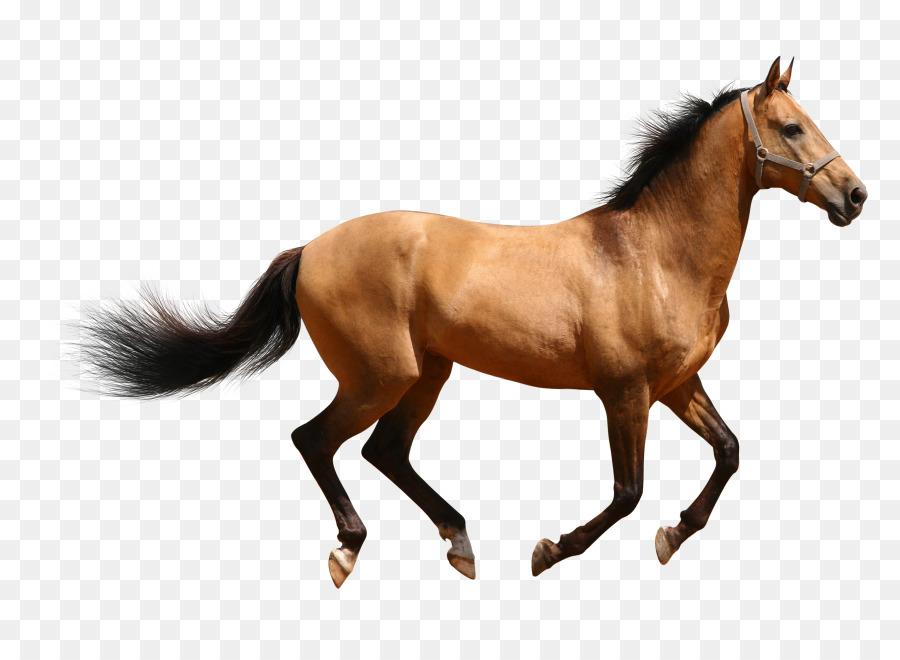 Descarga gratuita de Caballo árabe, Mustang, Caballo De Raza Clydesdale Imágen de Png