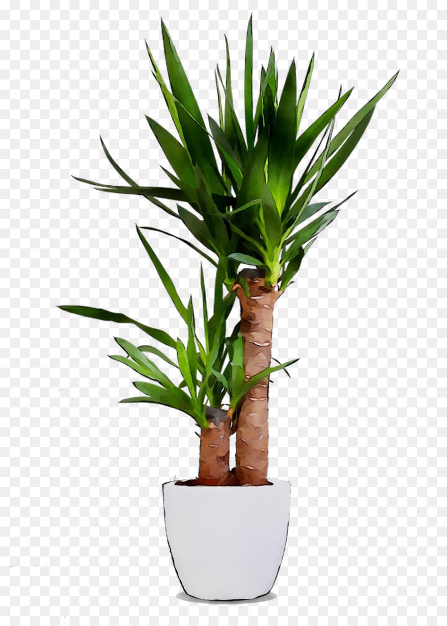 Descarga gratuita de Dracaena Fragans, Planta De Interior, Tallo De La Planta imágenes PNG