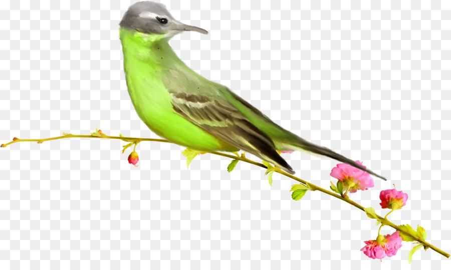 Descarga gratuita de Aves, Las Palomas Y Las Palomas, Los Pinzones Imágen de Png