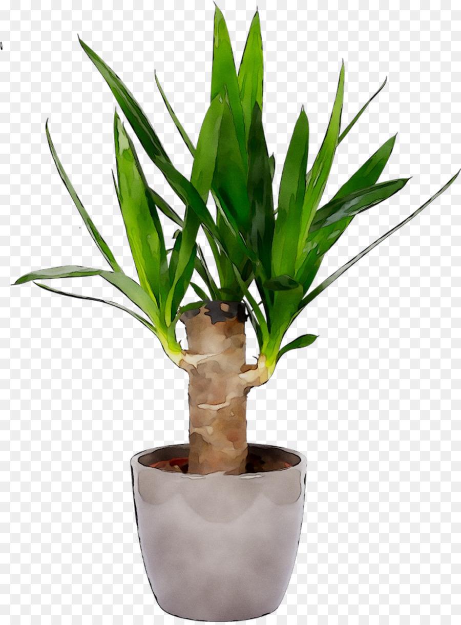 Descarga gratuita de Aspidistra Elatior, Planta De Interior, Las Plantas imágenes PNG