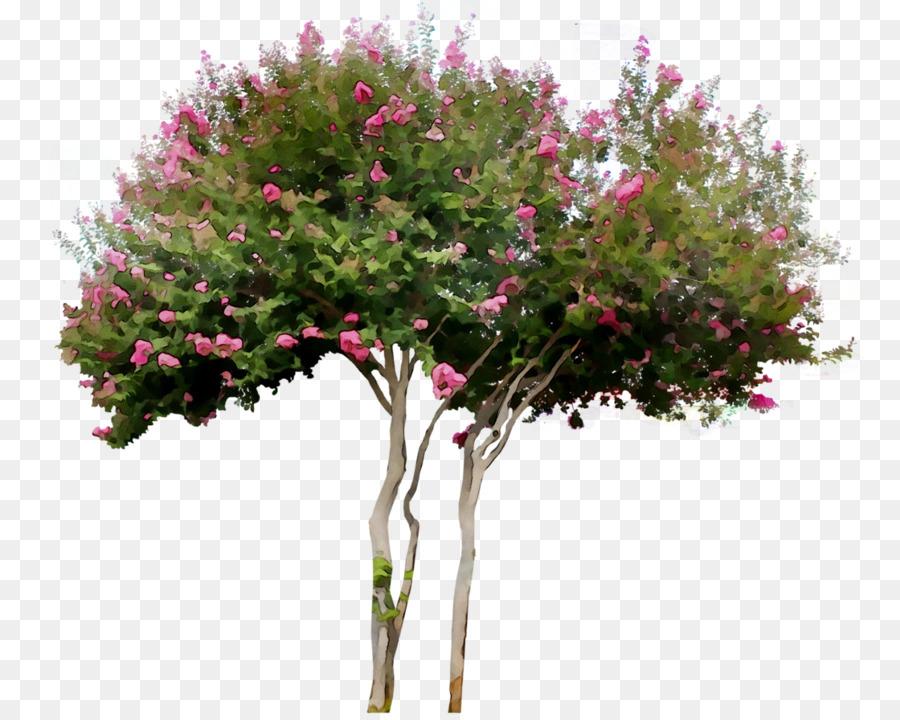 Descarga gratuita de Arbusto, Royal Poinciana, árbol imágenes PNG