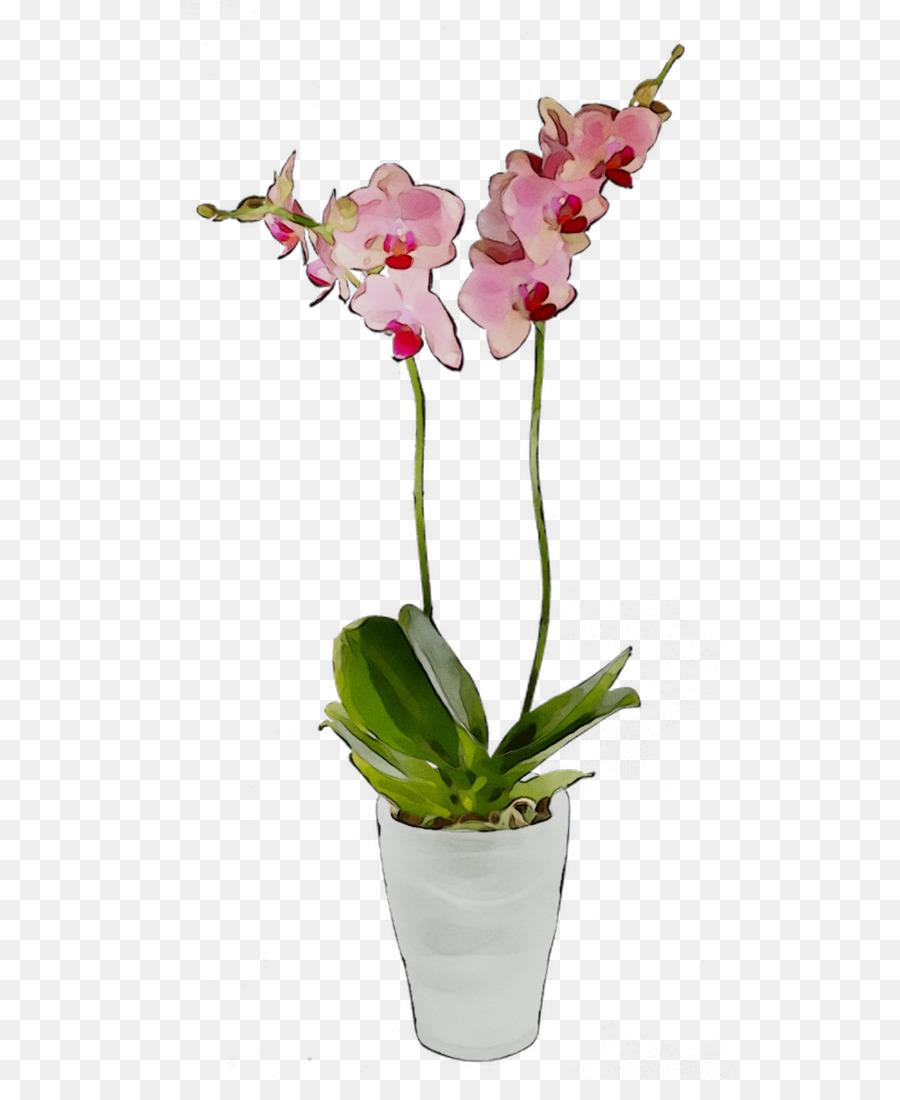 Descarga gratuita de La Polilla De Las Orquídeas, Flor, Las Orquídeas Cattleya imágenes PNG