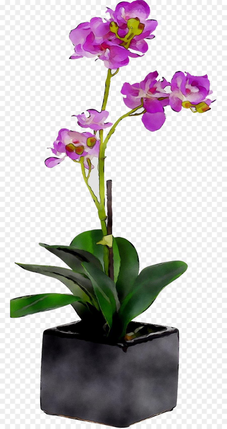 Descarga gratuita de La Polilla De Las Orquídeas, Diseño Floral, Flor imágenes PNG