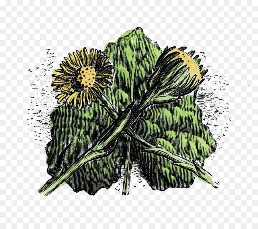 Descarga gratuita de La Acelga, De Verduras De Primavera, Flor imágenes PNG