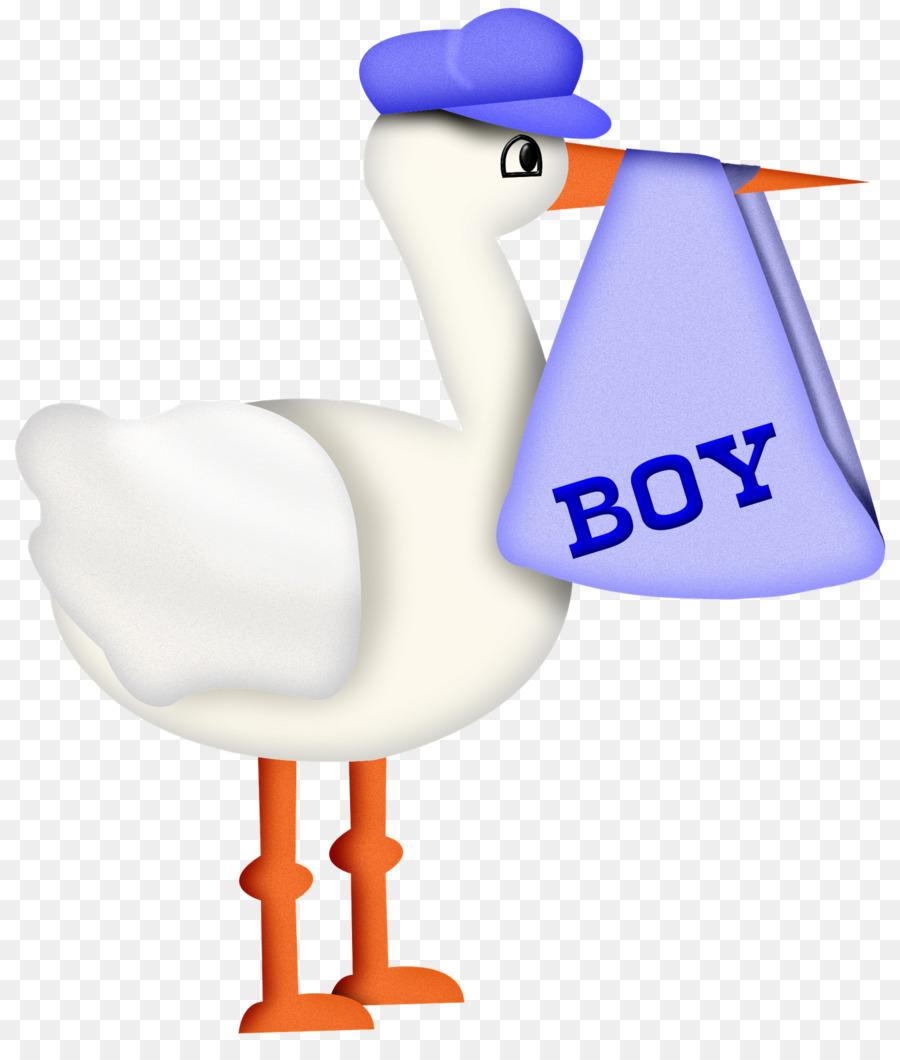 Descarga gratuita de Los Cisnes, Aves, Pico Imágen de Png
