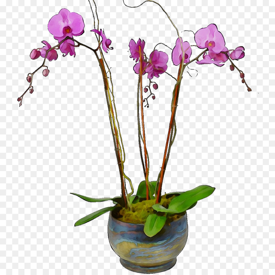 Descarga gratuita de La Polilla De Las Orquídeas, Flor, Diseño Floral imágenes PNG