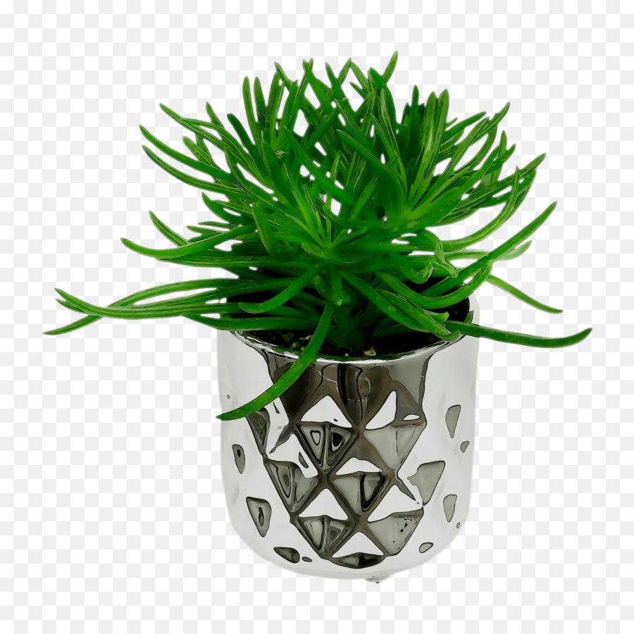 Descarga gratuita de Las Plantas, Los Lirios, Maceta imágenes PNG