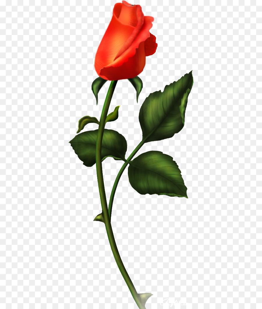 Descarga gratuita de Rosa, Photoscape, Flor imágenes PNG