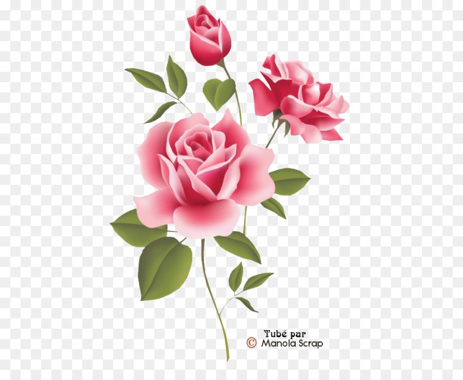 Descarga gratuita de Rosa, Flores De Color Rosa, Flor imágenes PNG