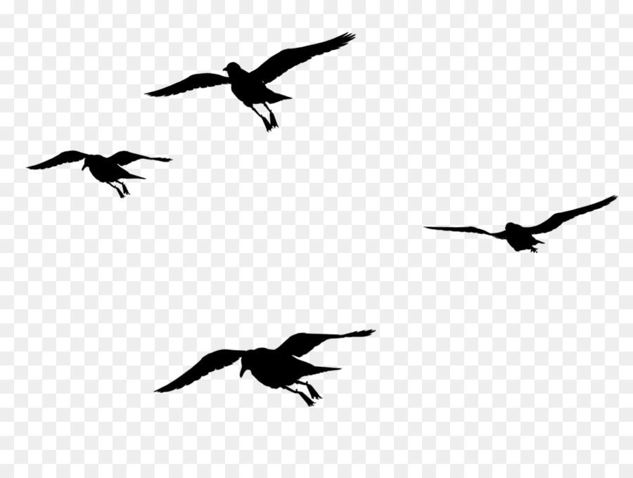 Descarga gratuita de Aves, La Migración De Las Aves, Pico Imágen de Png