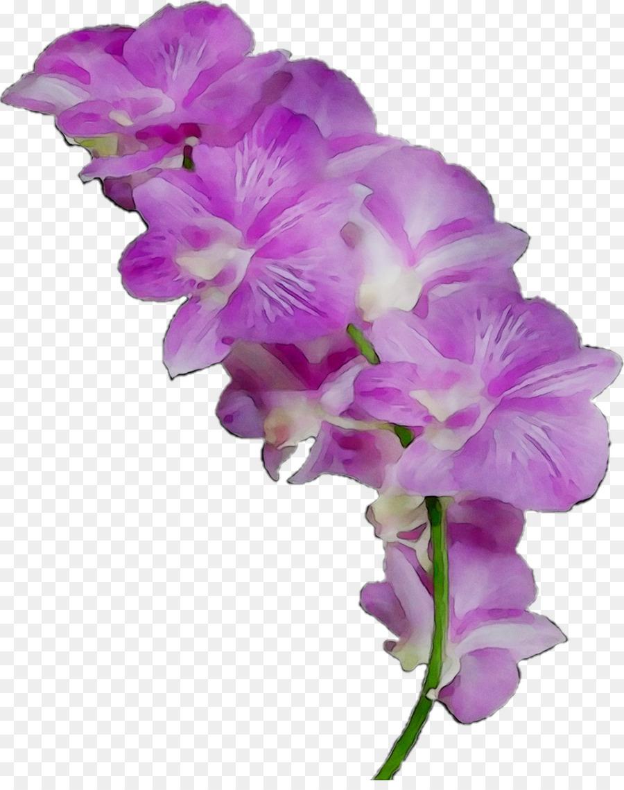 Descarga gratuita de La Polilla De Las Orquídeas, Las Flores Cortadas, Las Orquídeas imágenes PNG