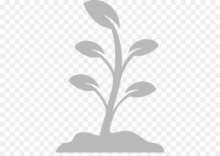 Descarga gratuita de Las Plantas, La Semilla, Hoja Imágen de Png