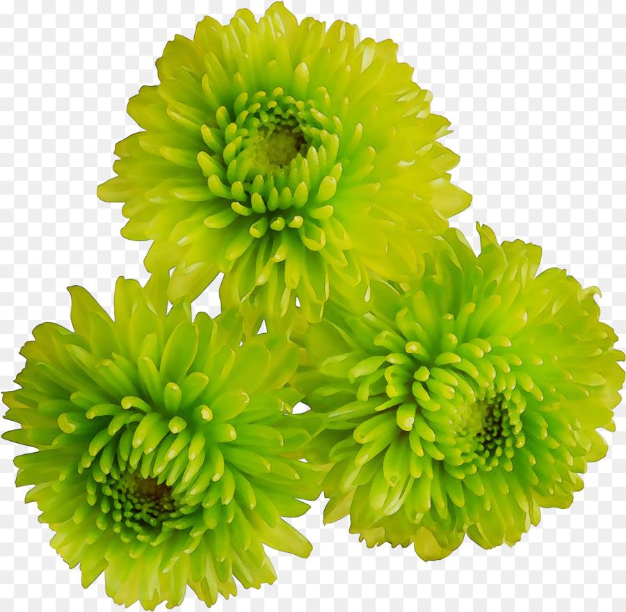 Descarga gratuita de La Corona De Margaritas, Flor, Crisantemo Imágen de Png