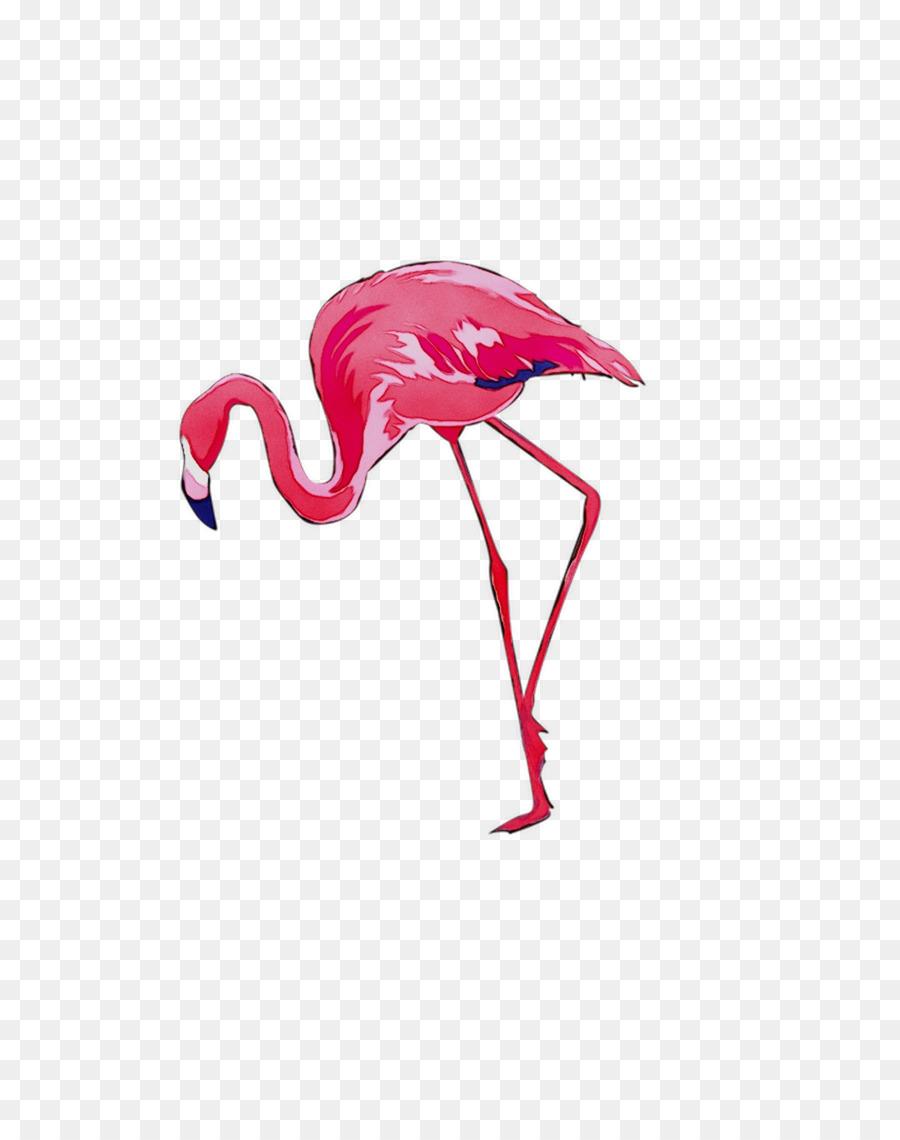 Descarga gratuita de Aves, Flamenco, Una Fotografía De Stock Imágen de Png