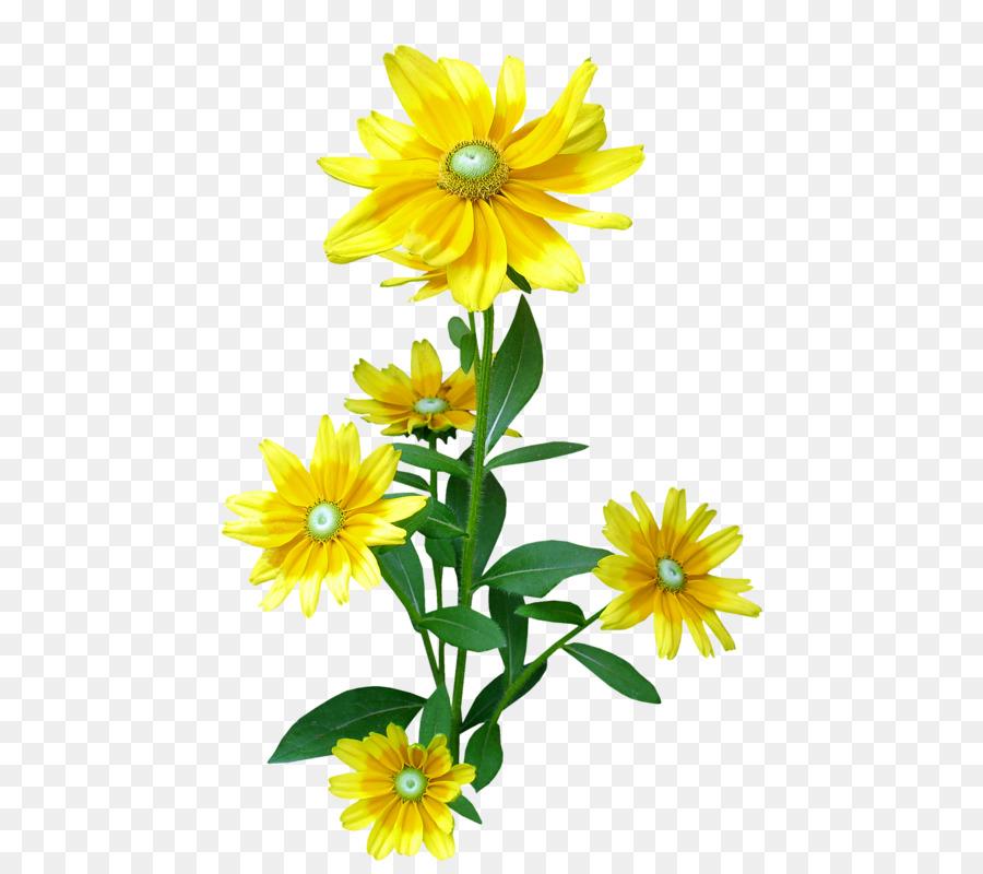 Descarga gratuita de La Corona De Margaritas, Flor, Diseño Floral Imágen de Png