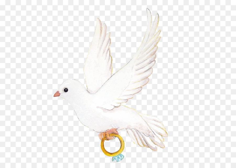 Descarga gratuita de Las Palomas Y Las Palomas, Paloma Mensajera, Aves imágenes PNG