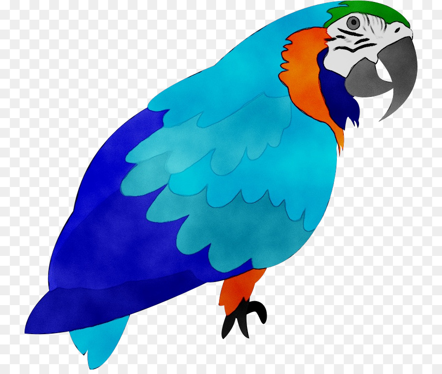 Descarga gratuita de Guacamayo, Aves, Agapornis imágenes PNG