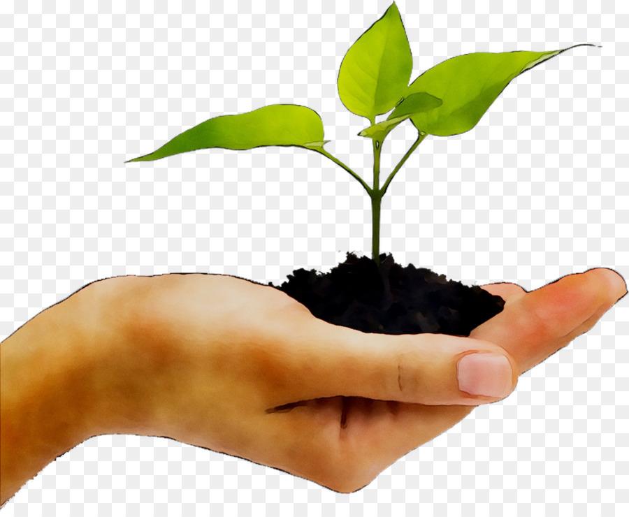 Descarga gratuita de Las Plantas, Una Fotografía De Stock, De La Mano imágenes PNG