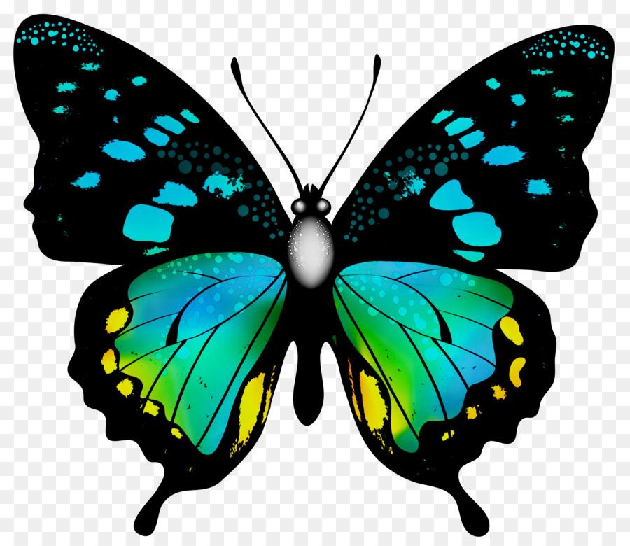 Descarga gratuita de Mariposa, Los Insectos, Glasswing Mariposa Imágen de Png