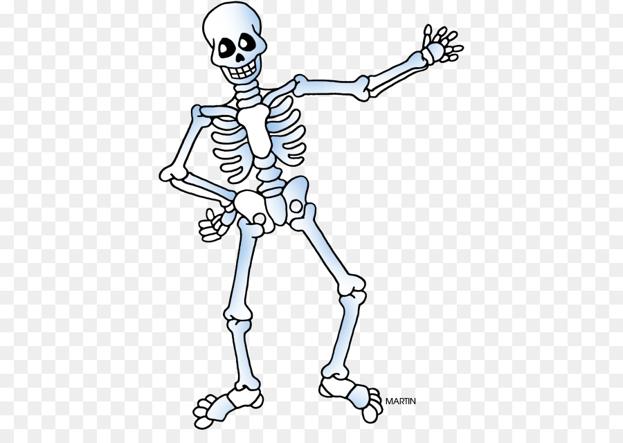 Esqueleto Esqueleto Humano Humanos Imagen Png Imagen
