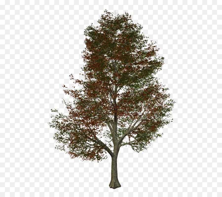 Descarga gratuita de árbol, La Energía Renovable, Bloom Energy Imágen de Png